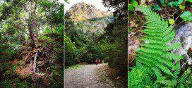 Национальный парк  на полуострове Дилек